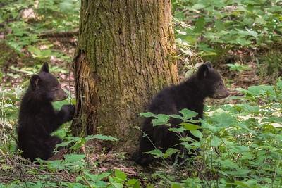 Bella's spring cubs 2020