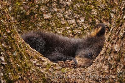 Tree Cradle