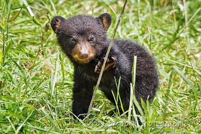 Spring Baby Bear
