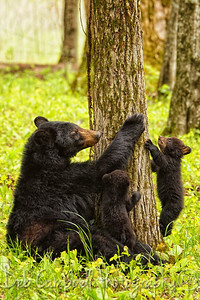 Family in the Forest