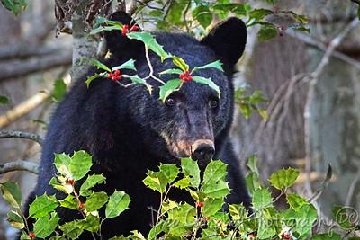 Hollie Beary the Christmas Bear