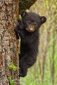 Cub hanging out