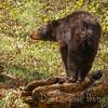 Hazel on a Log