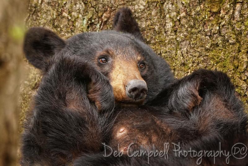 Sweet Hazel Bear