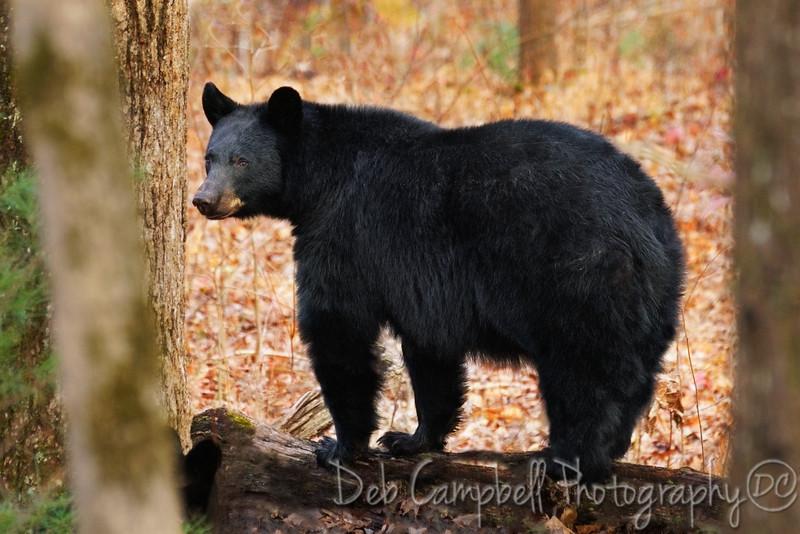 December Bear