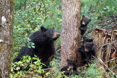 Hazel and her 4 cubs