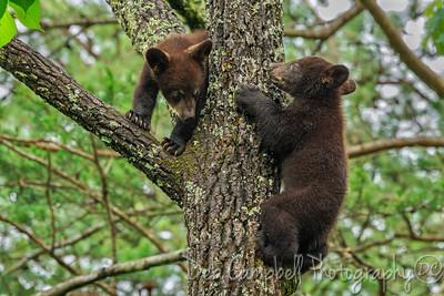 Cinnamon Cubs