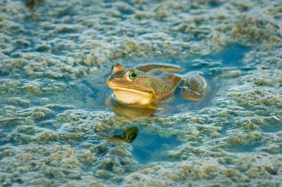 Frog Green Cay Wetlands Boynton Beach, Florida © 2009