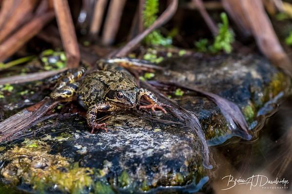 Frog-0749