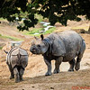 Greater One-horned Rhino and baby rhino