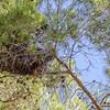 Nest of an Eagle