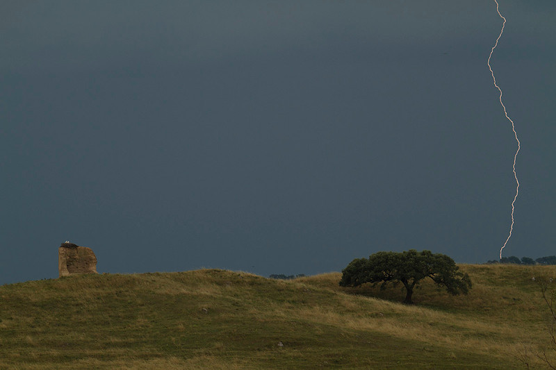 Nido de cigüeñas en el horizonte