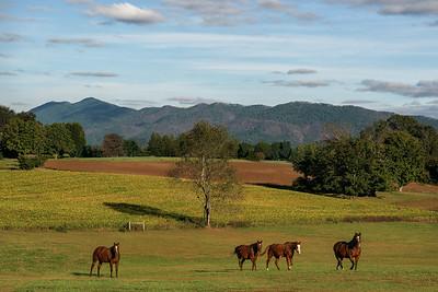 Four Horses-1
