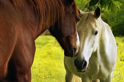 Horse Buddies Pittman Center, Tennessee