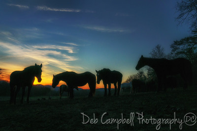 Sunset with the Horses