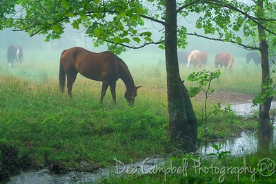 Early Morning at the Pasture