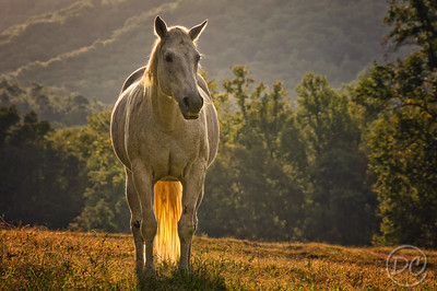 Angelic White Horse