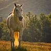 Angelic White Horse