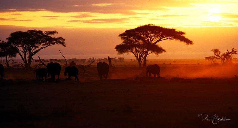Elephants at sunset, Amboseli