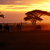 Elephants at sunset, Amboseli