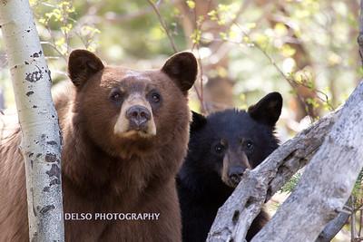 Tahoe Bears Spring 2017-12