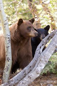 Tahoe Bears Spring 2017-15