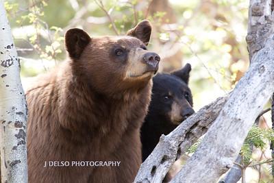 Tahoe Bears Spring 2017-17
