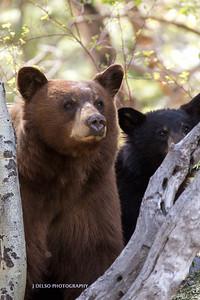 Tahoe Bears Spring 2017-13