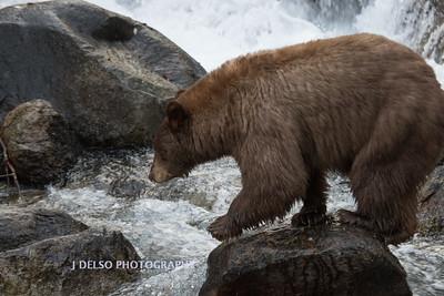 Tahoe Fall Bears 2017-8785