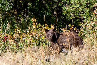 black bear at RM NP