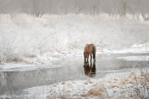 Horse Of Snowy River