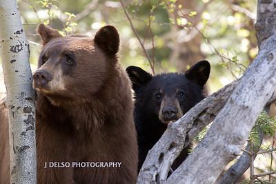 Tahoe Bears Spring 2017-16