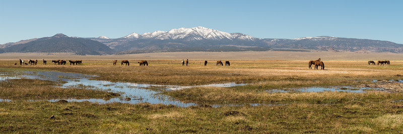 Wild Horses Eastern Sierra-2