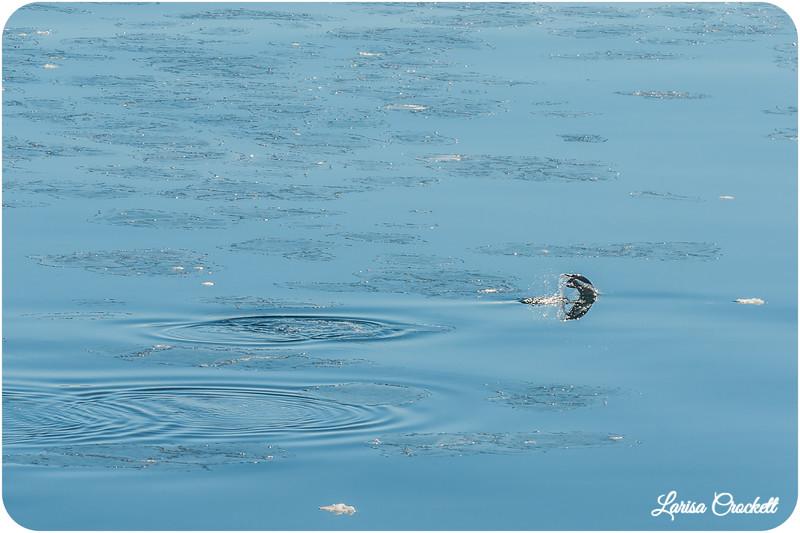 Flying in Water
