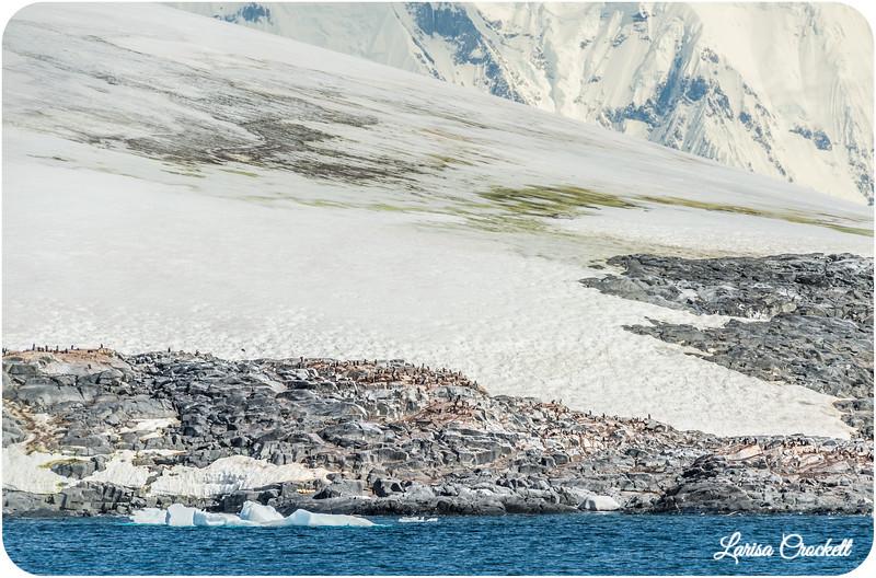 Penguins on Iceberg
