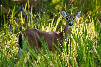 Deer Dinner Island Ranch WMA Hendry County, Florida © 2009
