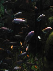 CO 2011 05 Denver Aquarium 31