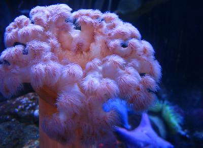 CO 2011 05 Denver Aquarium 24