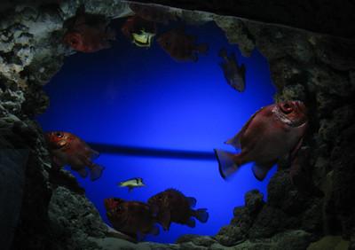 CO 2011 05 Denver Aquarium 19