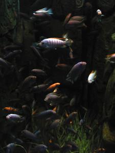 CO 2011 05 Denver Aquarium 32