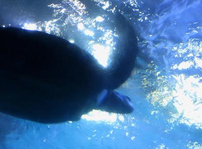 CO 2011 05 Denver Aquarium 12