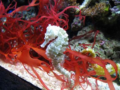 CO 2011 05 Denver Aquarium 14