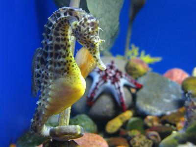 CO 2011 05 Denver Aquarium 26