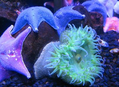 CO 2011 05 Denver Aquarium 23