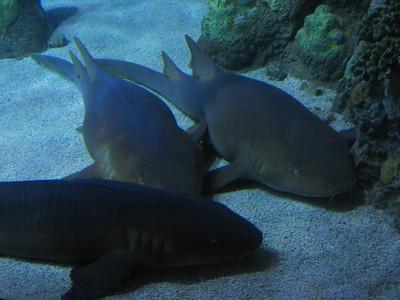 CO 2011 05 Denver Aquarium 21