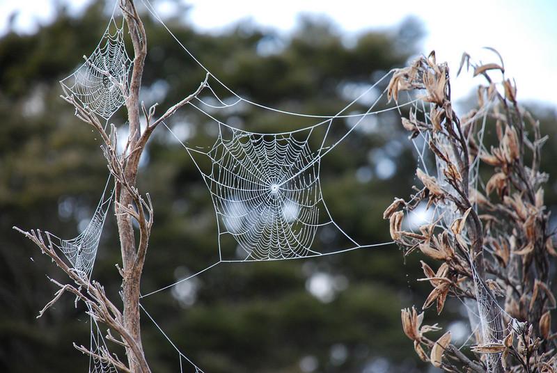 Frost on orbweb. Knobs Flat, Eglinton Valley, Fiordland National Park.