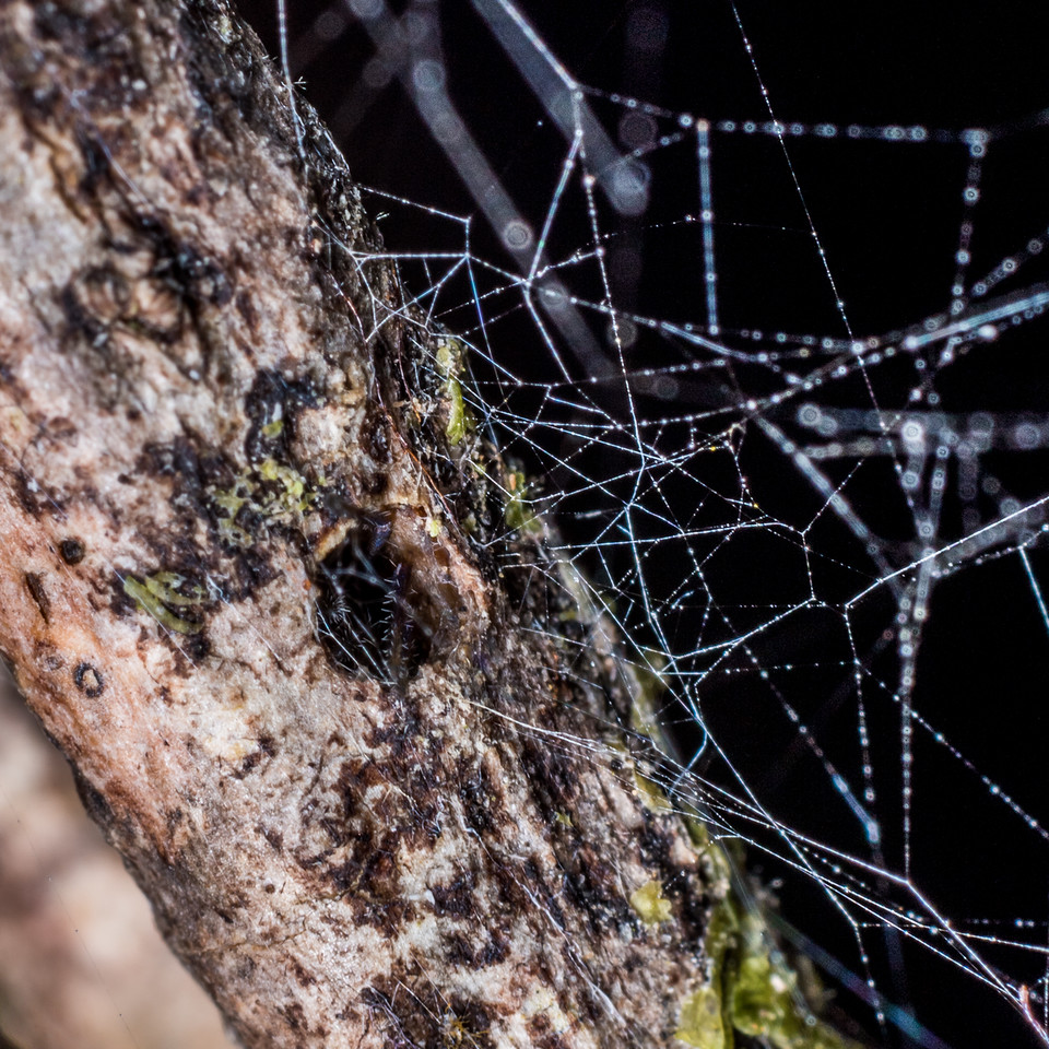 Spider's dwelling. Port Craig, Fiordland National Park.