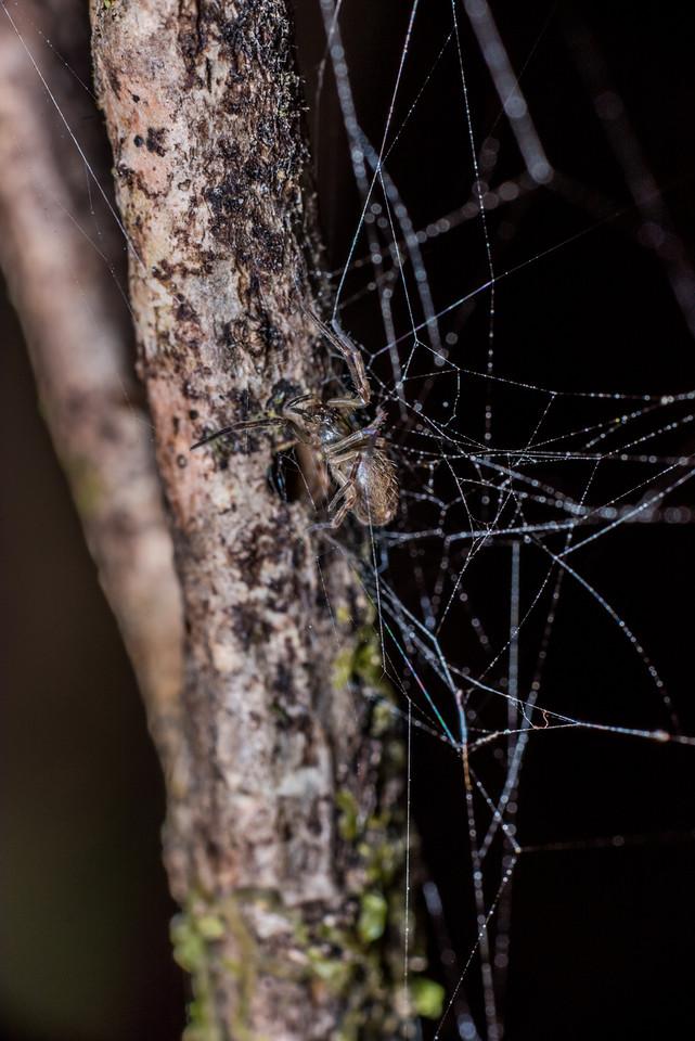 True spider (Araneomorphae), unidentified. Port Craig, Fiordland National Park.