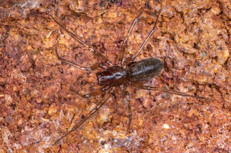 Unidentified spider. Summit Crater, Taranaki.