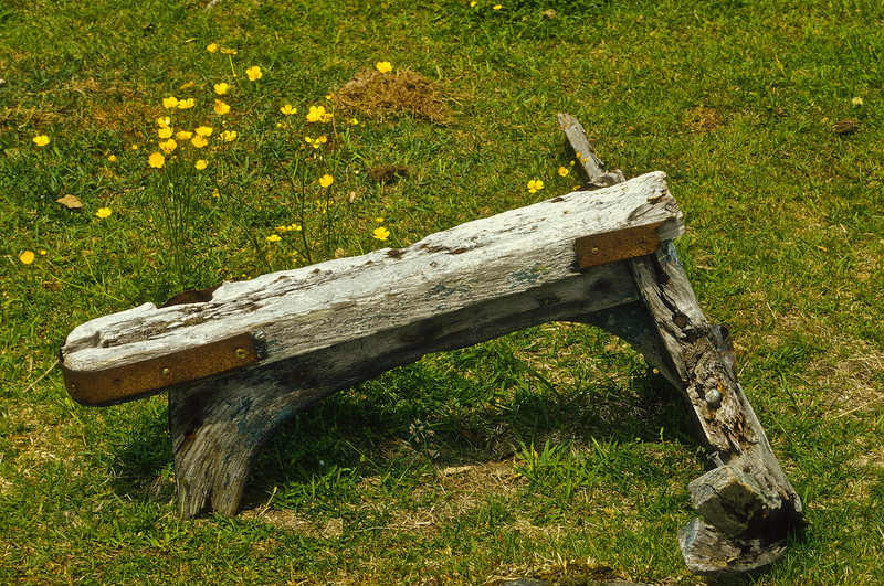 An old sled lost among the wildflowers in the Candian Maritimes.